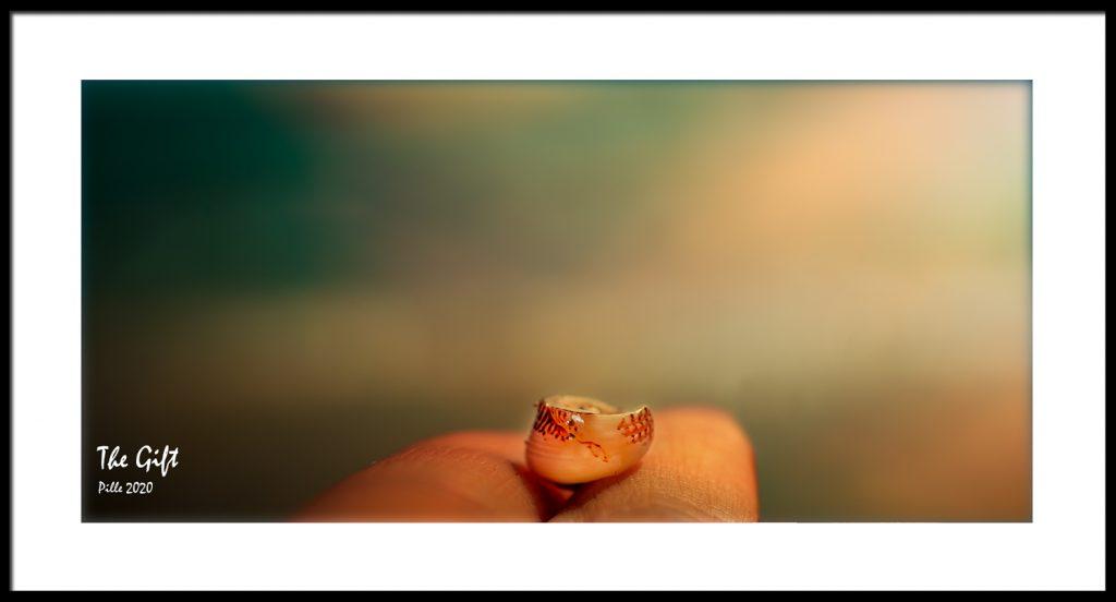 Pille_Repnau_Nature_Art (12)