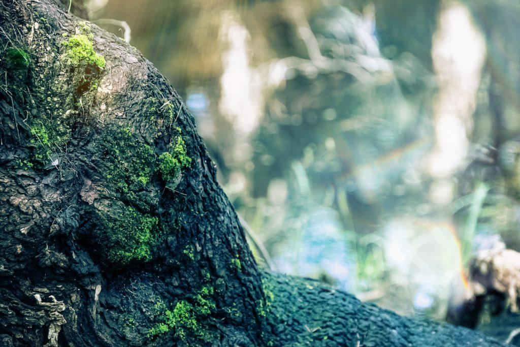 Pille_Repnau_Nature_Art (14)