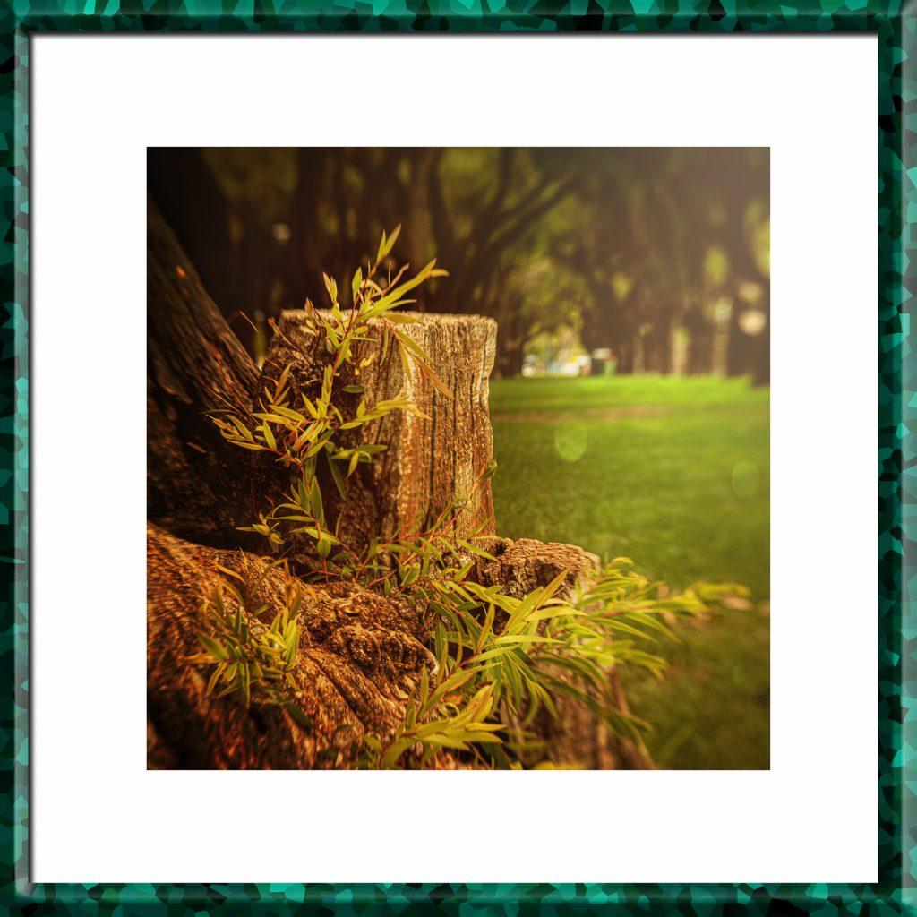 Pille_Repnau_Nature_Art (18)