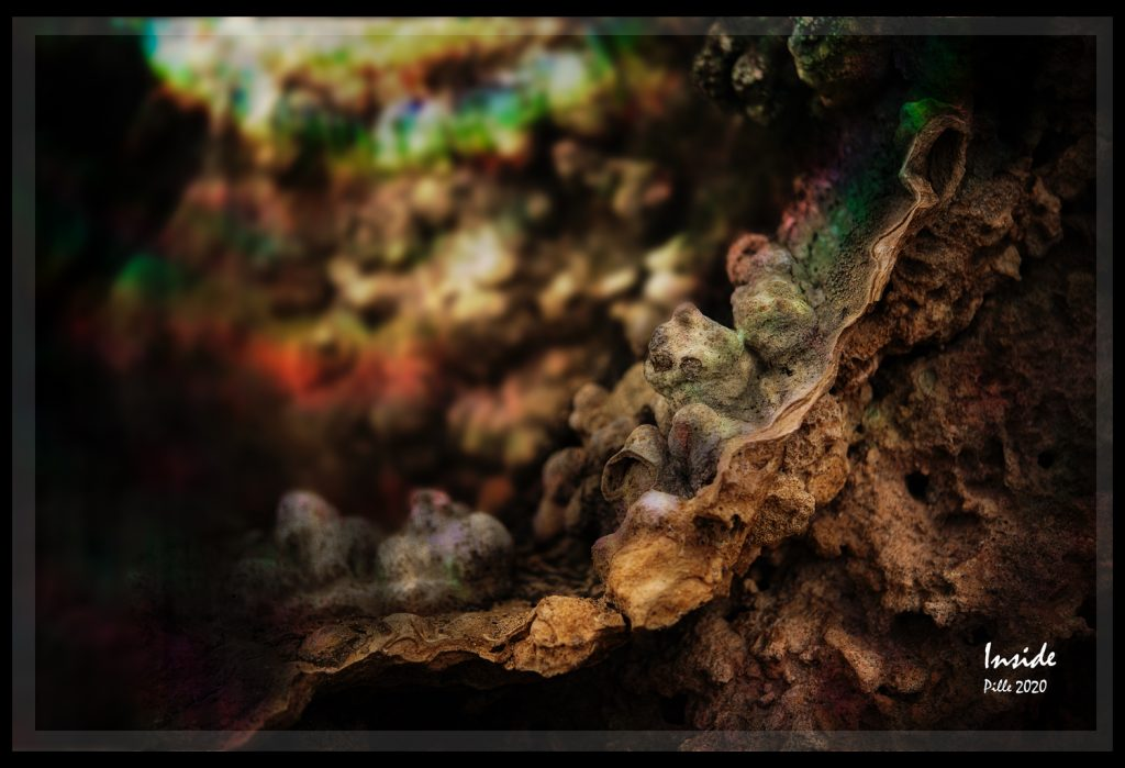 Pille_Repnau_Nature_Art (2)
